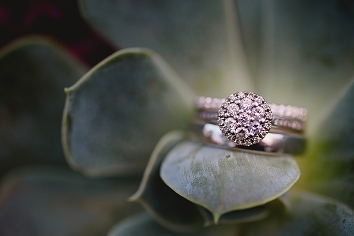 Beautiful photograph of a wedding ring on a succulent at the University of Alberta in fall before their Faculty Club reception in Edmonton
